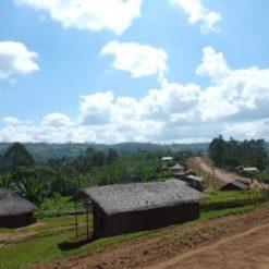 Ethiopia Coffee Farm