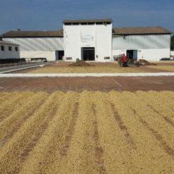 El Salvador Coffee Farm Building